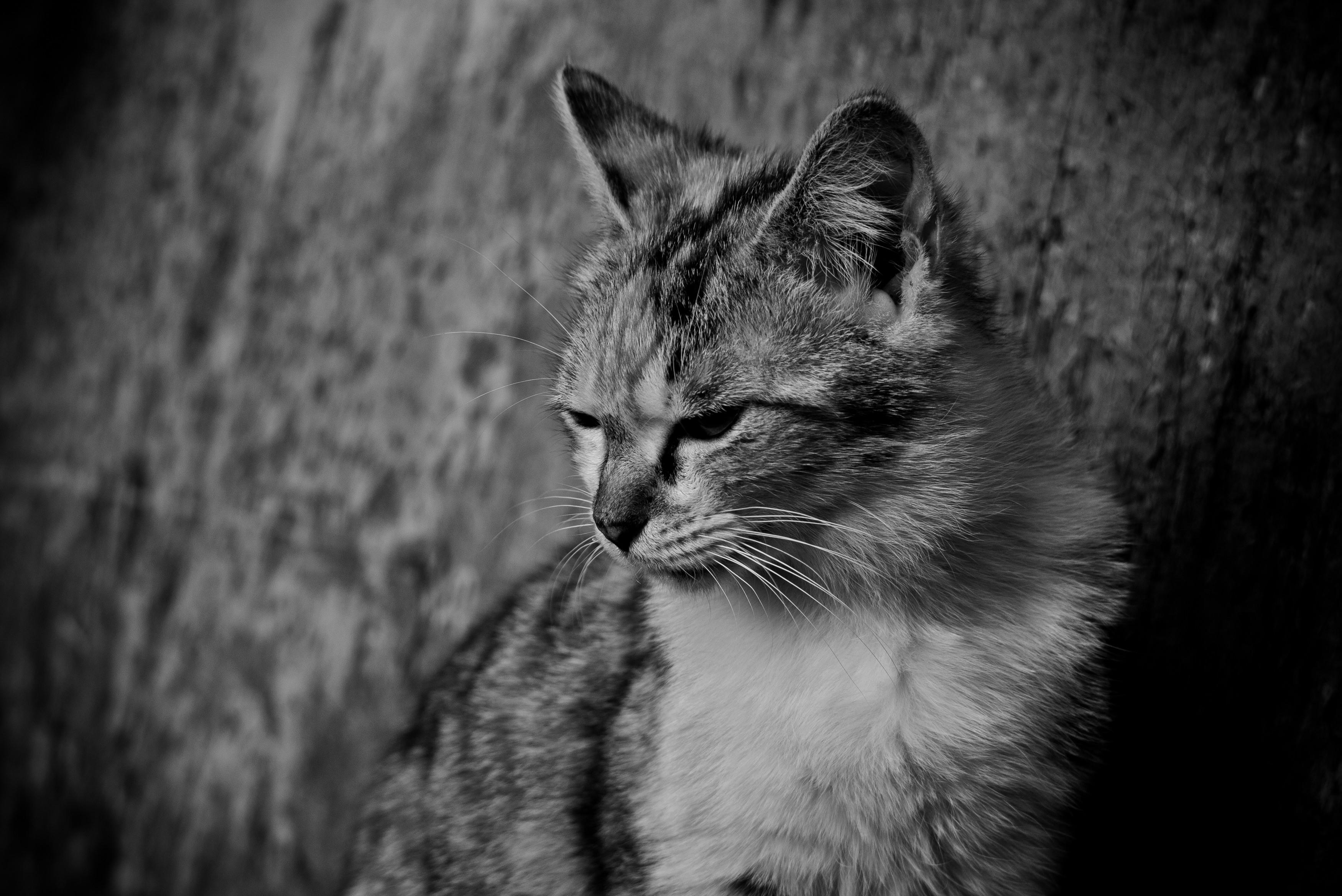 叱られて意気消沈な猫