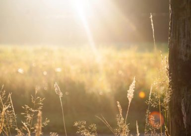 太陽が差し込む秋