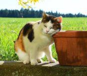 植木鉢に頬ずりする猫