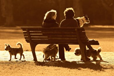 アニマルコミュニケーションと瞑想