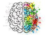 言葉は脳で作られます